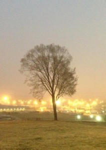Tree overlooking the Mississippi Fairgrounds.